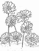 Daisy Coloring Pages Flower Gerber Print Planting Scout Printable Getcolorings Fantastic Getdrawings Dai sketch template