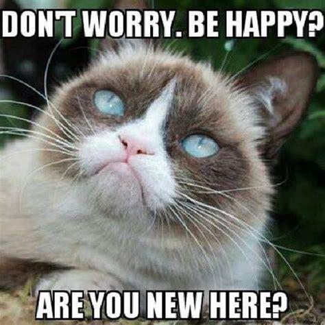 New Grumpy Cat Memes - 10 new grumpy cat memes
