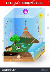 Carbon Cycle Vector Diagram Shows Movement Stock Vector