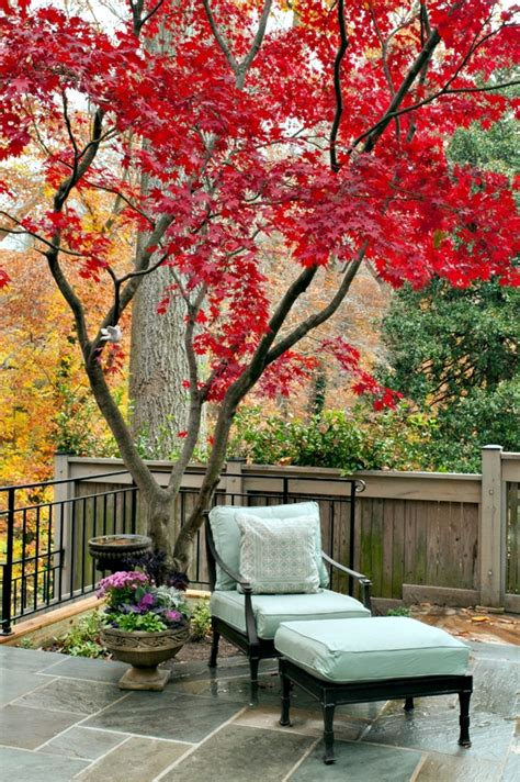 small outdoor trees garden design ideas the best trees for small gardens 5534