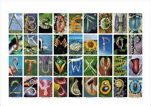 12 alphabets made of objects With pictures of letters made from objects