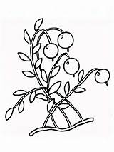 Coloring Cranberry Pages Cowberry Berries Printable Fruits Print Recommended Mycoloring sketch template