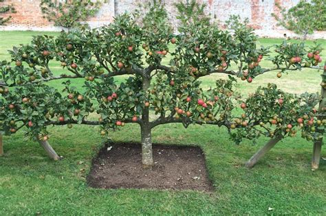 how to plan an orchard hgtv