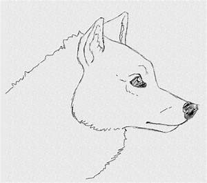Easy Wolf Drawings Coloring Page Coloring Page Wolf Face ...