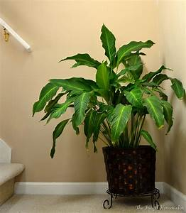 Day 4 pops of color for Peace lily in bathroom