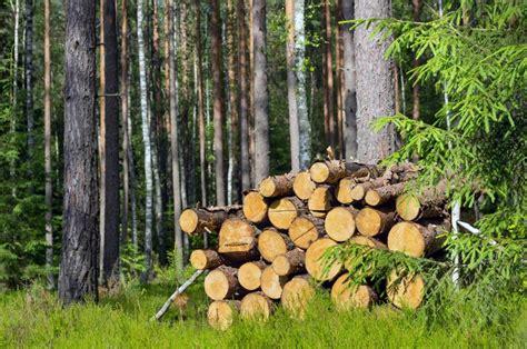 purchasing sustainable wood  global wood