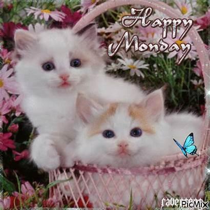 Monday Happy Kitty Picmix