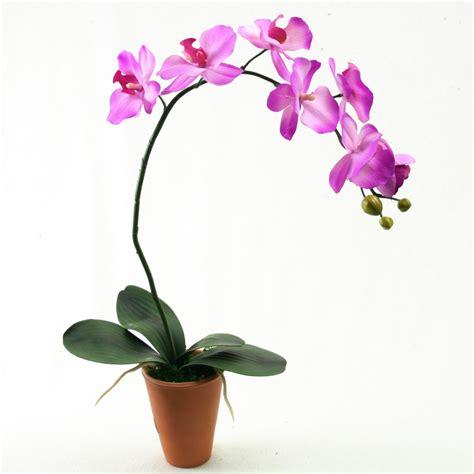 compo orchid 233 e artificielle en pot 50cm compositions diverses l 233 t 233 indien