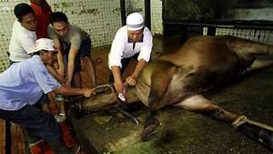 PETA wants live cameras in foreign abattoirs | Breaking ...