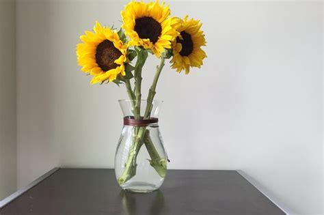 care  cut sunflowers hunker