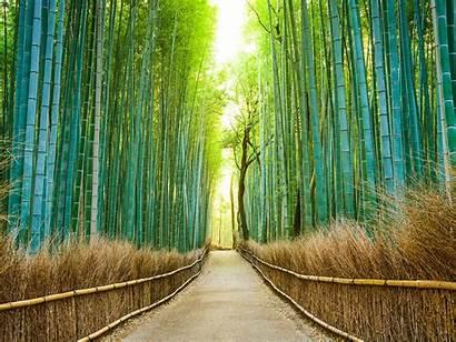 Japan Places Forest Kyoto Limit