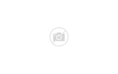 State Carolina North Rhododendrons Roan Gap Landscape