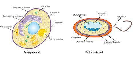 Cells Microscopes Schools