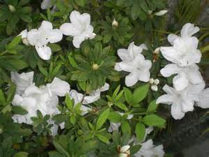 White Flowering Plants with Flowers