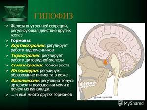 Гормон надпочечников гипертония