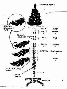 11 Best Images Of Anatomy Of A Tree Worksheet
