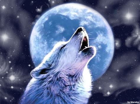 Anime Wallpaper Wolf by 47 Cool Anime Wolf Wallpapers On Wallpapersafari