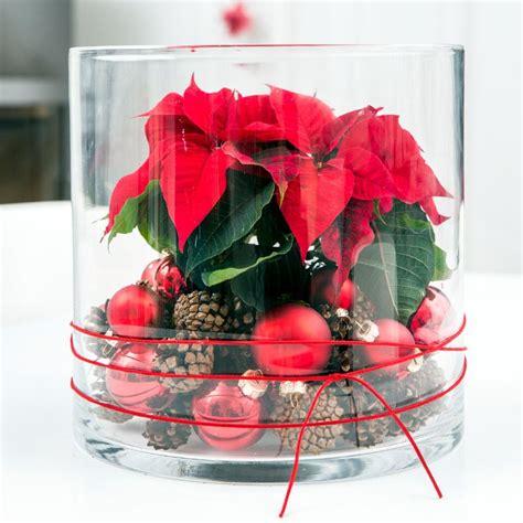 weihnachtsstern pflanze deko deko mit weihnachtssternen leicht gemacht weihnachtsdeko