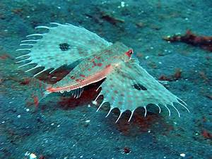 Unusual Deep Sea Animals