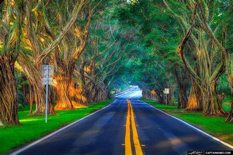 banyan trees  bridge road  hobe sound florida hdr
