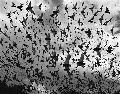 bat migration lower viragos pinterest
