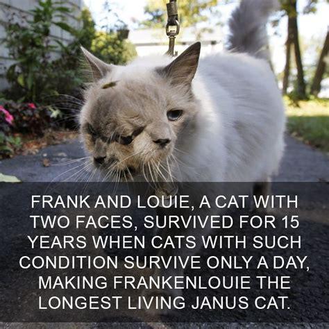 amazing cat facts    didnt
