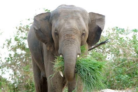 elephant cuisine elephants you just gotta them redduckpost