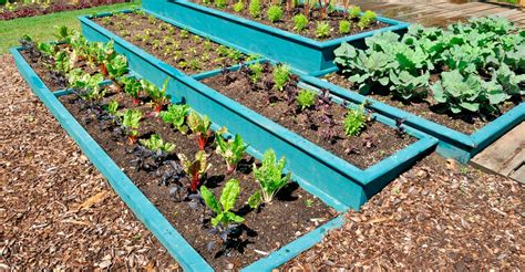 Tips For Raised Garden Beds  My Garden Life