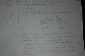 Unit 1  Evolutionary Biology