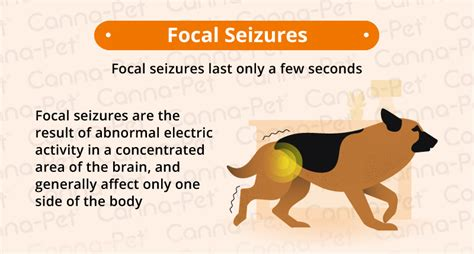 Why Do Old Dogs Have Seizures?