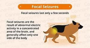 old dogs seizures