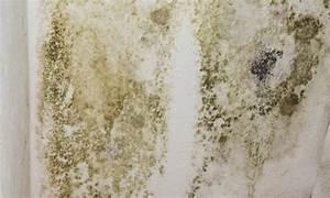 champignon de maison dangereux 7 la moisissure dans With champignon de maison dangereux