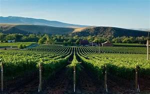 Summer U2019s Best Washington State Wines