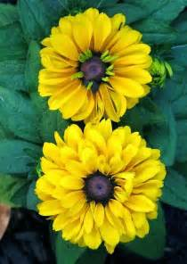 Kentlands Spring Flowers