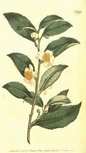 Средство для похудения китайский чай