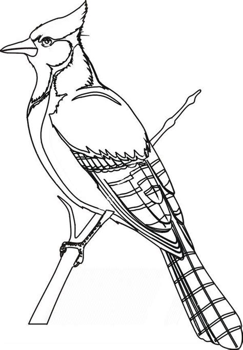 winter birds coloring pages  getcoloringscom  printable colorings pages  print  color