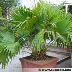 Plante D Extérieur En Pot : l 39 hivernage des plantes en pot ~ Teatrodelosmanantiales.com Idées de Décoration