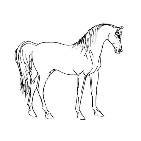 Kleurplaat Paard Tinker by Leuk Voor Paarden 0037