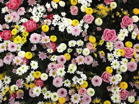 bureau virtuel lyon tapis de fleurs d acupression 28 images tapis mysa