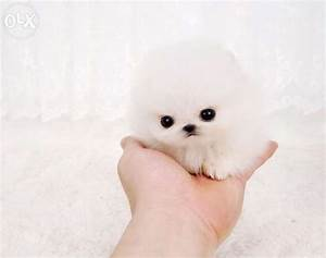 1262 best Teacup Dogs images on Pinterest | Doggies ...