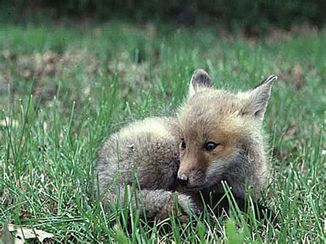 Cool Baby Animal Wallpapers - cool baby animal wallpapers