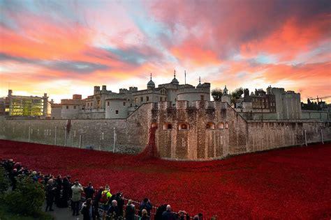 armistice day final poppy    tower  london