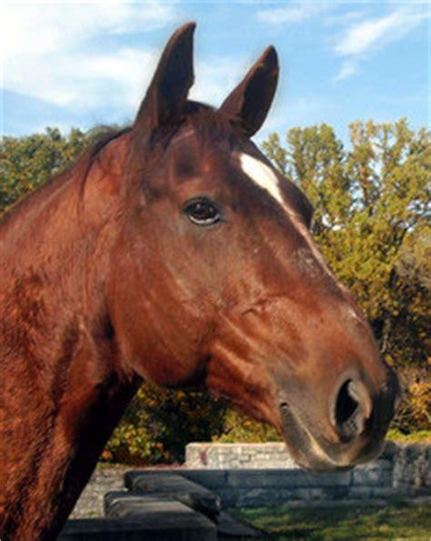 portrait de cheval en peinture peinture equestre