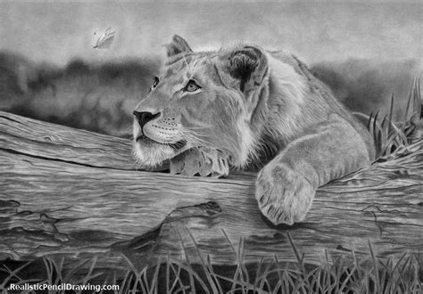 realistic pencil drawing learn   draw tutorials