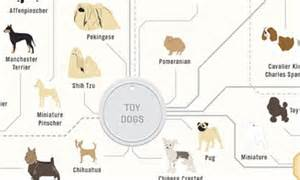 The Family Tree Of DOGS Infographic Reveals How Every