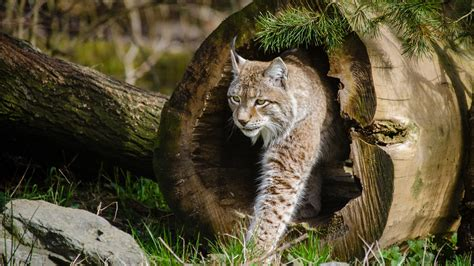 animal wallpapers  hd wallpapers  animals