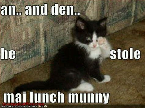 Meme Kitty - kitty cat meme