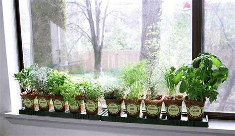 Indoor Windowsill Garden by Indoor Herb Garden For Beginners Corner Of My Home