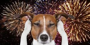 Why Are Dogs Scared of Fireworks? · Happy Hound