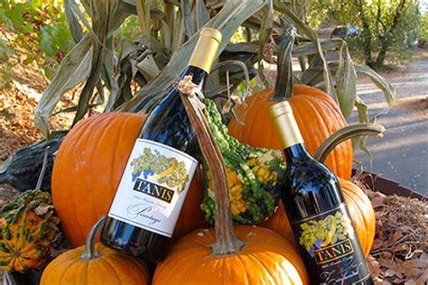 beautiful fall vineyard  tanis vineyards winery